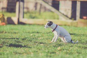 Kako Dresirati Psa Da Vrši Nuždu