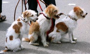 Kako Naučiti Psa Da Hoda Na Uzici