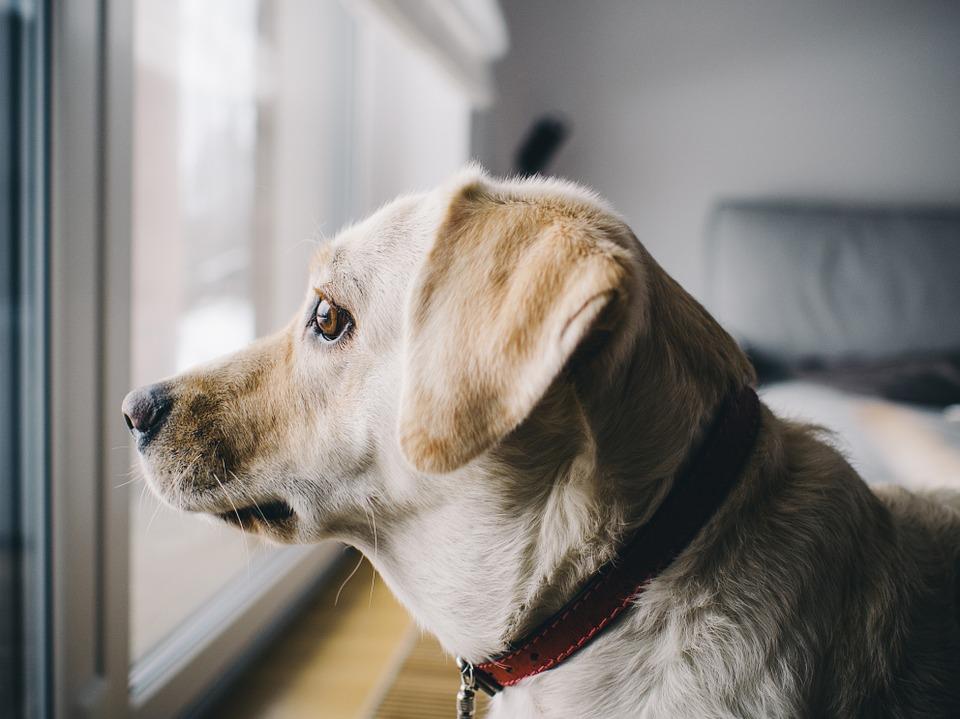 Kako Spriječiti Lajanje Psa