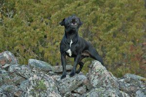 Kako zaustaviti lajanje psa