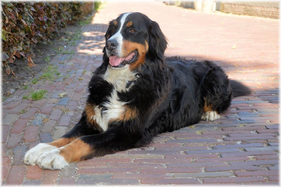 Kako se riješiti glista kod pasa