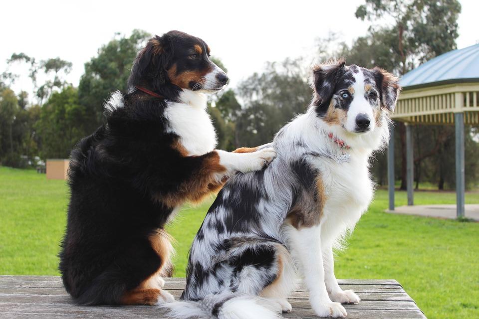 Psi se druže