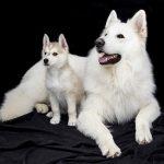 Tjeranje pasa