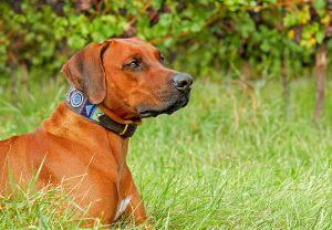 Uređaji protiv lajanja psa