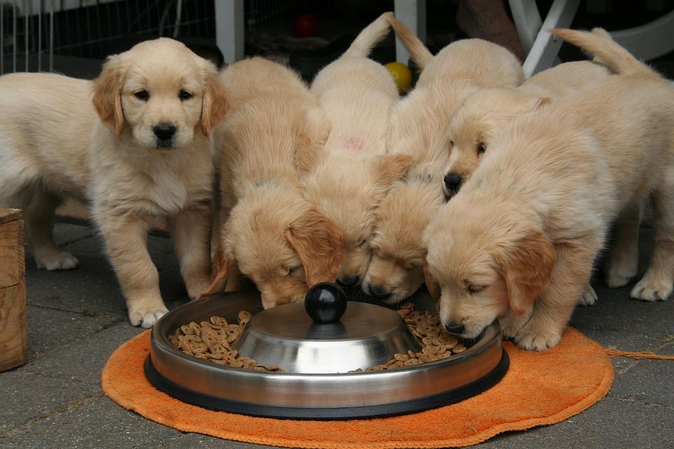 Pretjerano hranjenje psa