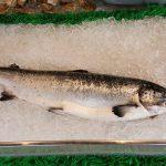 Sirova riba – losos