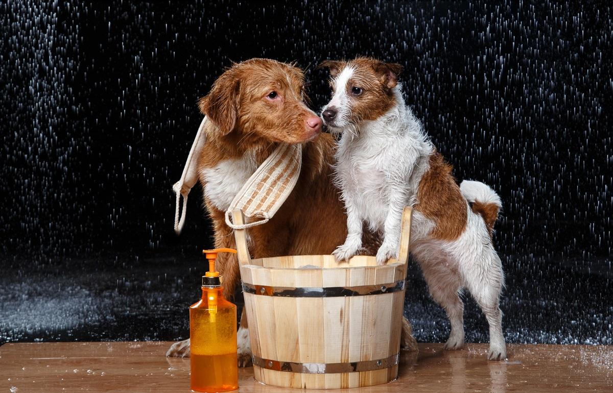 Kako se riješiti buha na psu