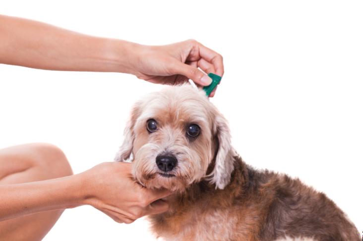Kako se riješiti buha kod štenca