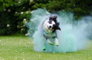 Kako se riješiti buha kod pasa