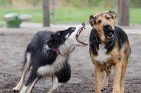 Kako dresirati agresivnog psa