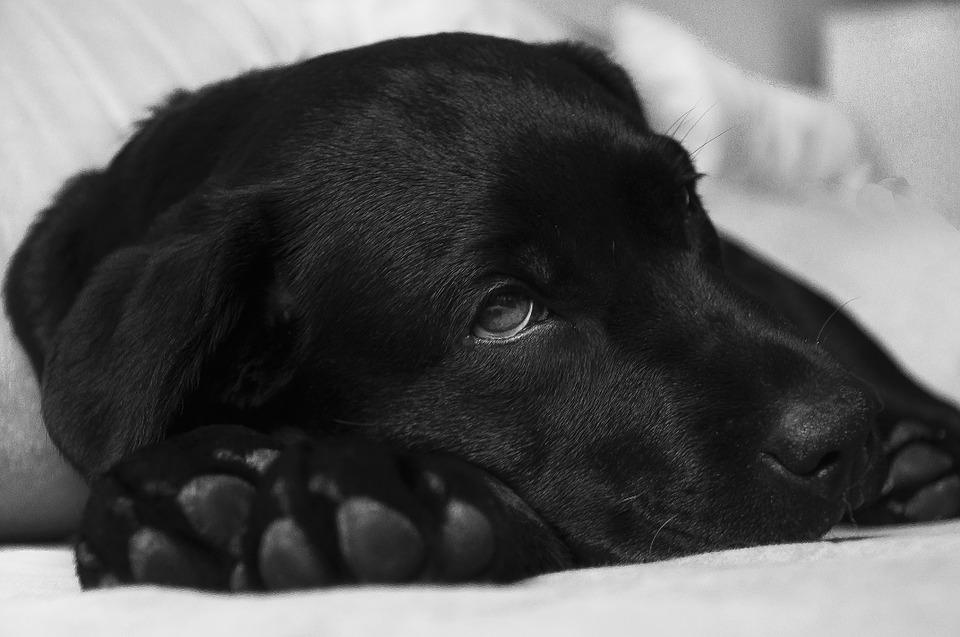 Kako izazvati povraćanje pasa
