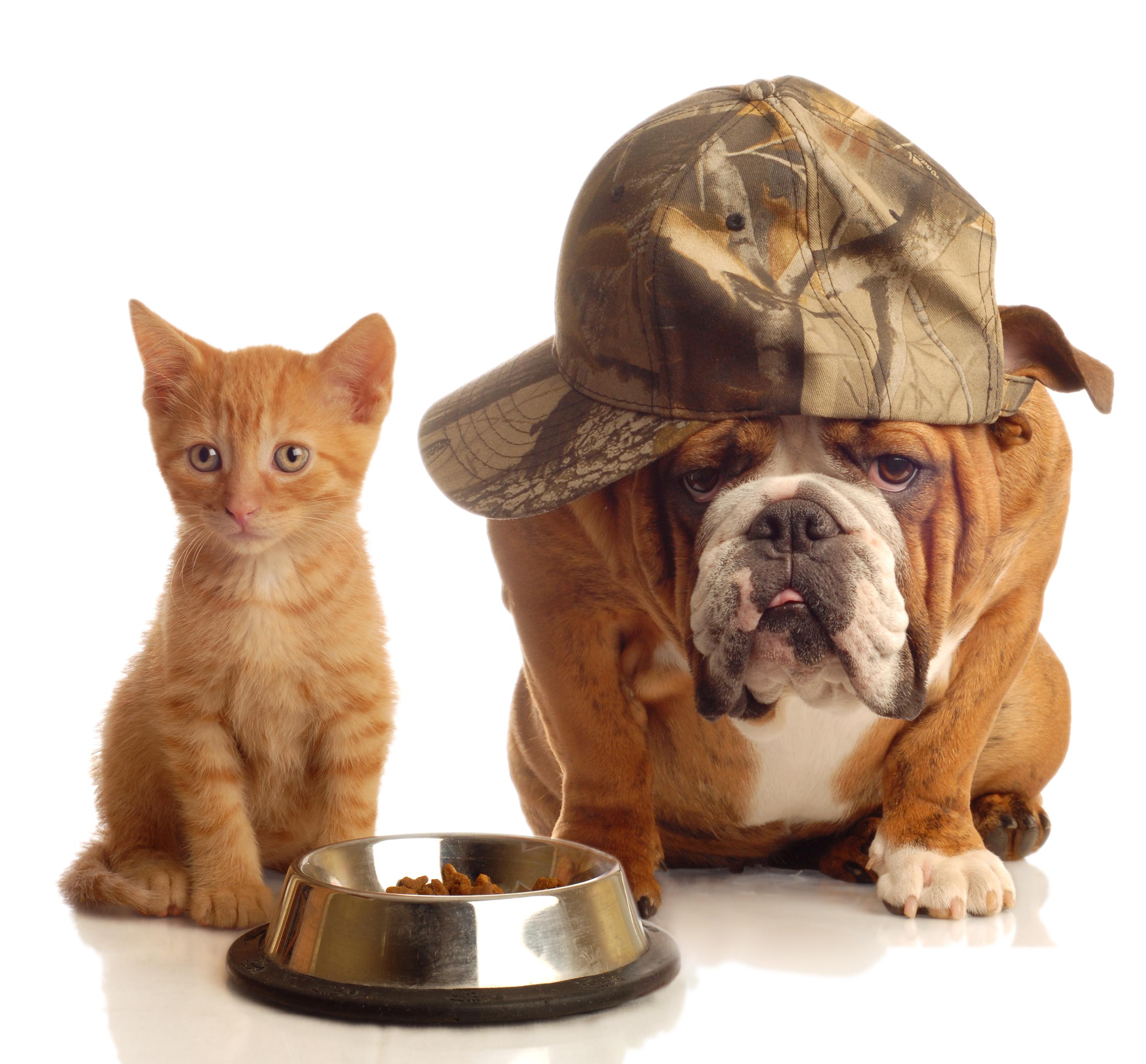Kako liječiti alergiju pasa na hranu