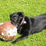 Kako zaustaviti žvakanje psa