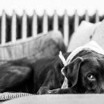 Kako zaustaviti povraćanje kod psa