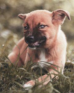 Sta znaci kad pas jede travu