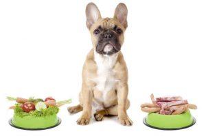 Uzročnici alergijskih reakcija kod pasa