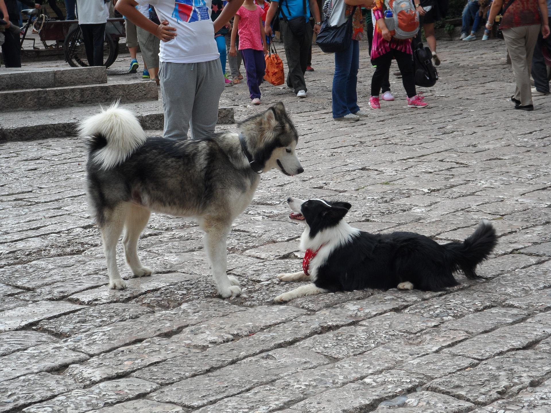 Zašto su psi agresivni