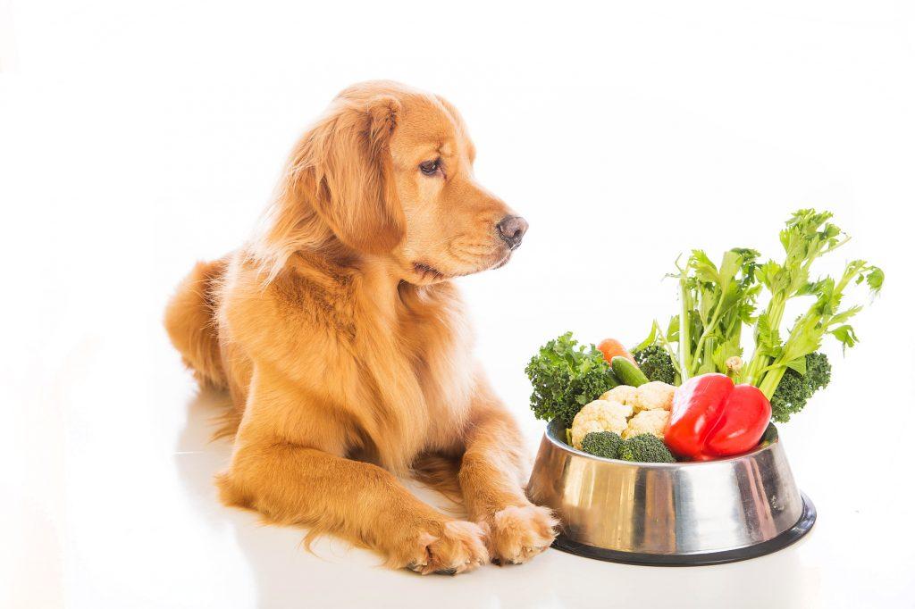 Koje su prednosti zdravije prehrane pasa
