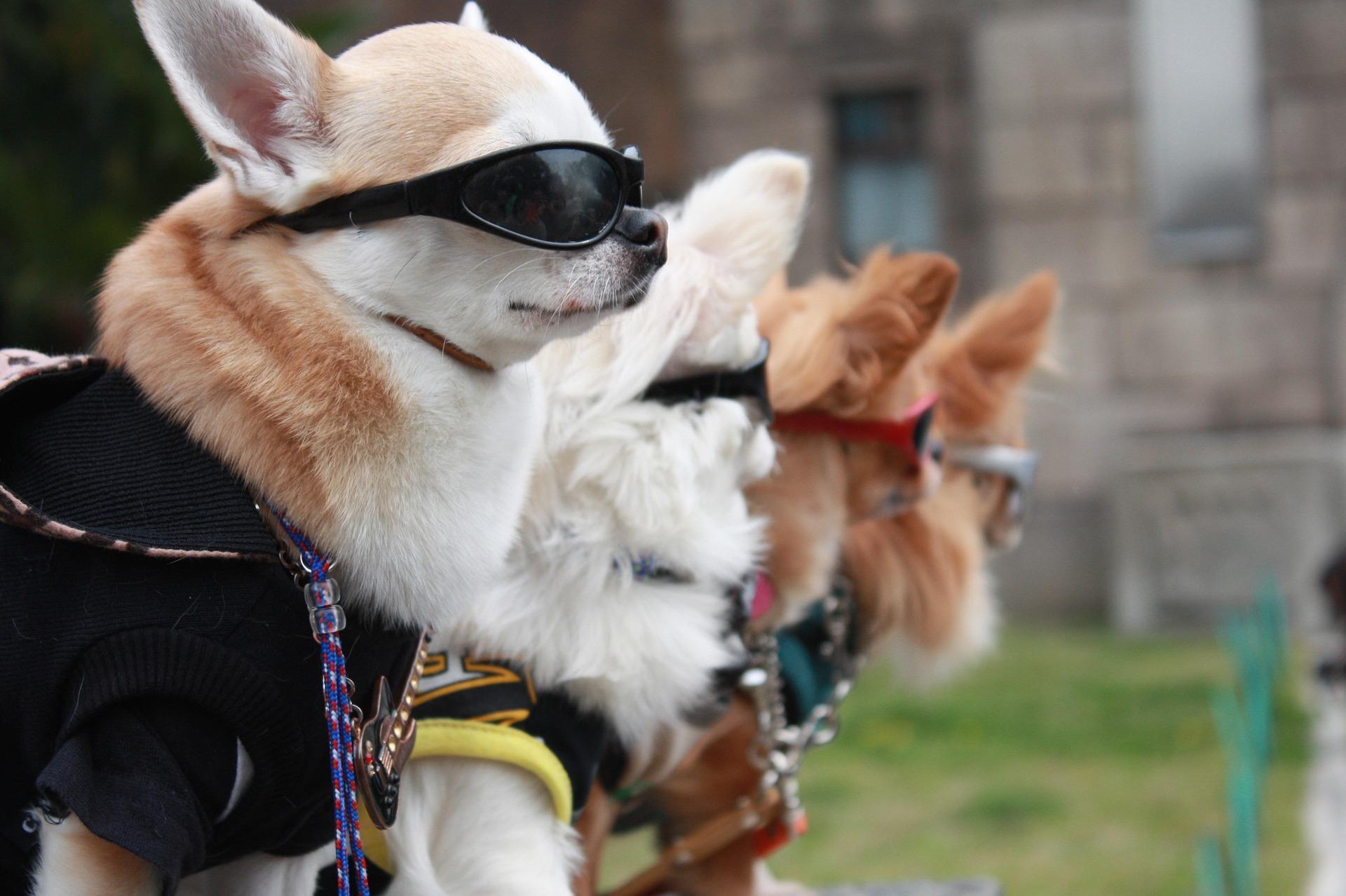 Lista top 10 najpopularnijih pasmina pasa