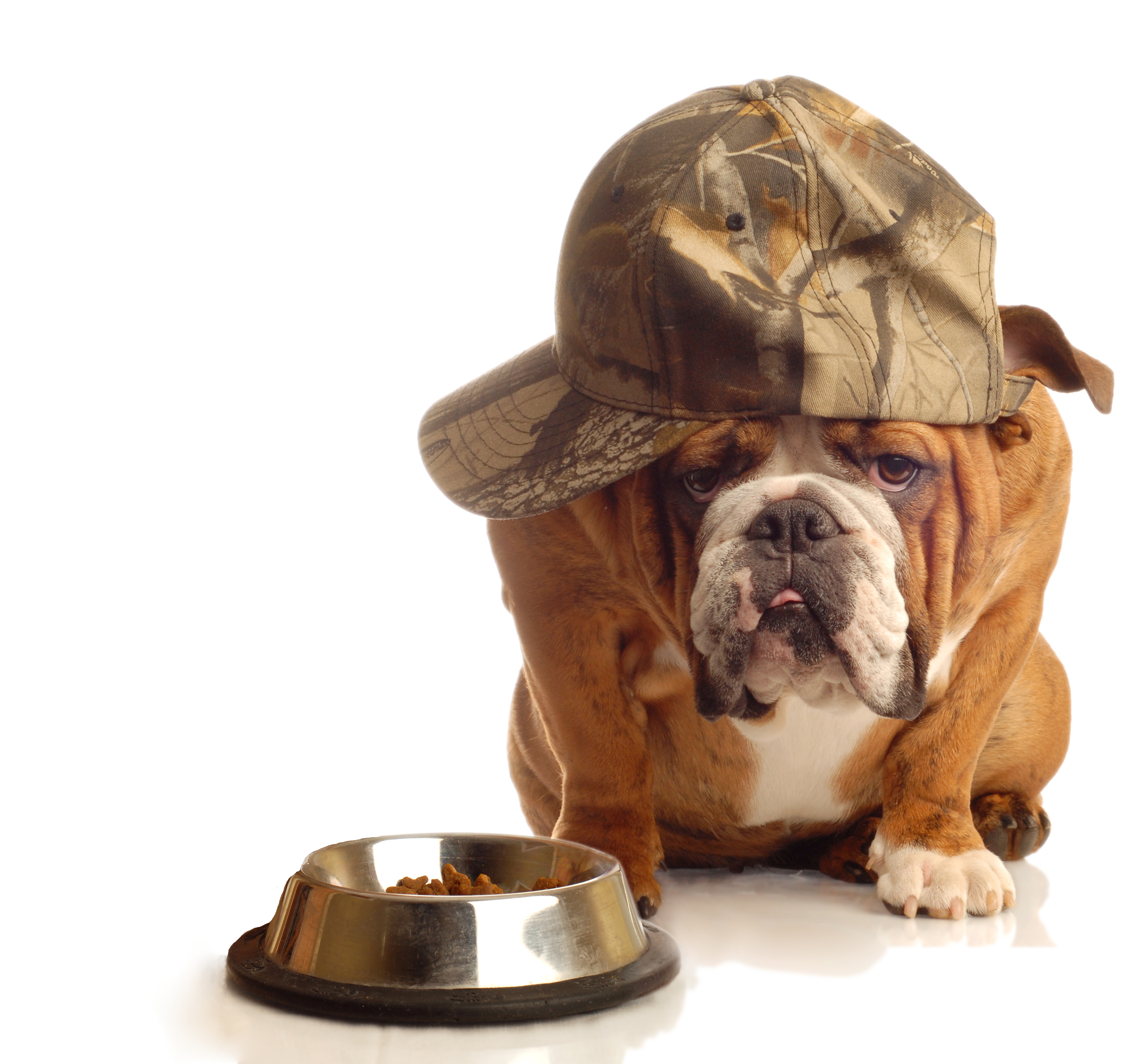 Najbolja dehidrirana hrana za pse