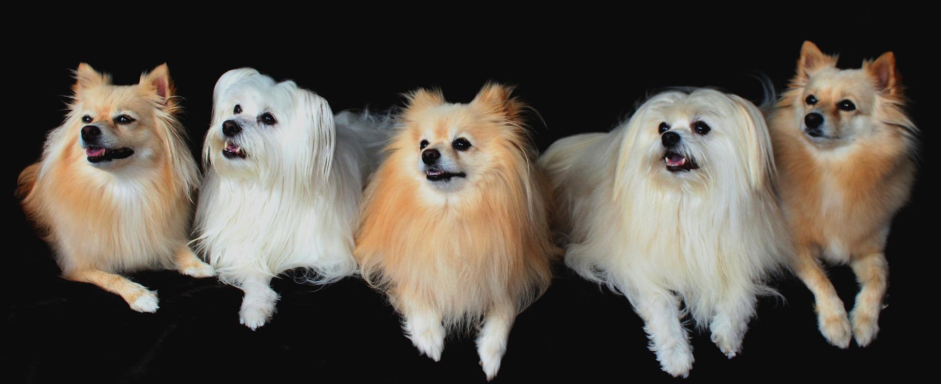 Najljepši psi na svijetu