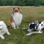 Najveći psi na svijetu