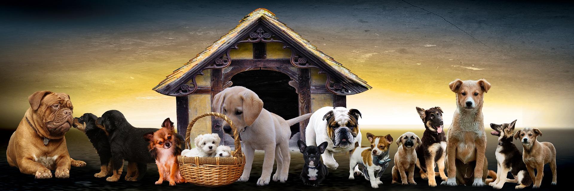 Top 10 najslađih pasmina pasa