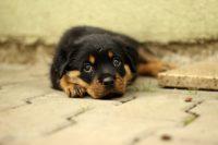 Anksioznost kod pasa