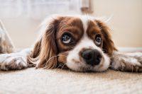Kako smanjiti stres kod psa