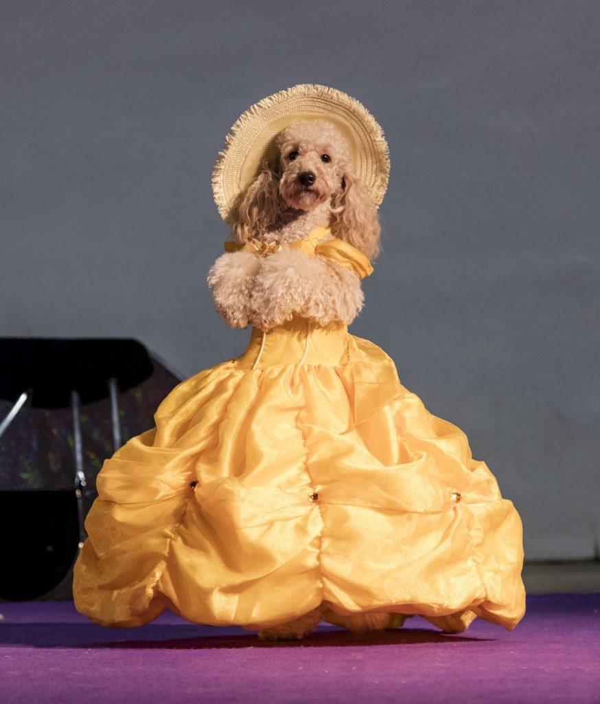 Smiješni pas s kostimom