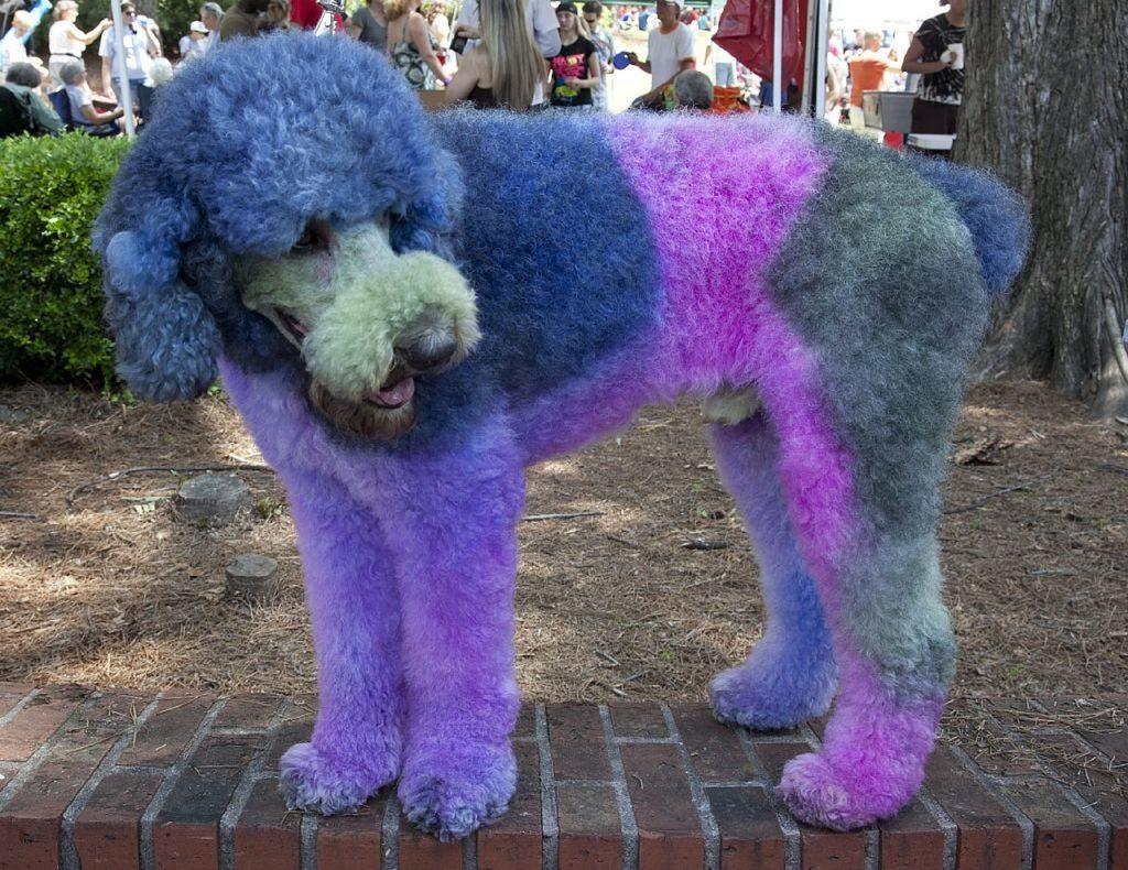 Smiješni pas s veselim bojama.