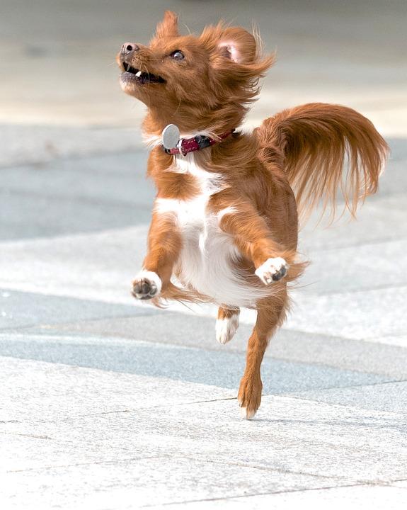 Smiješni video sa psima