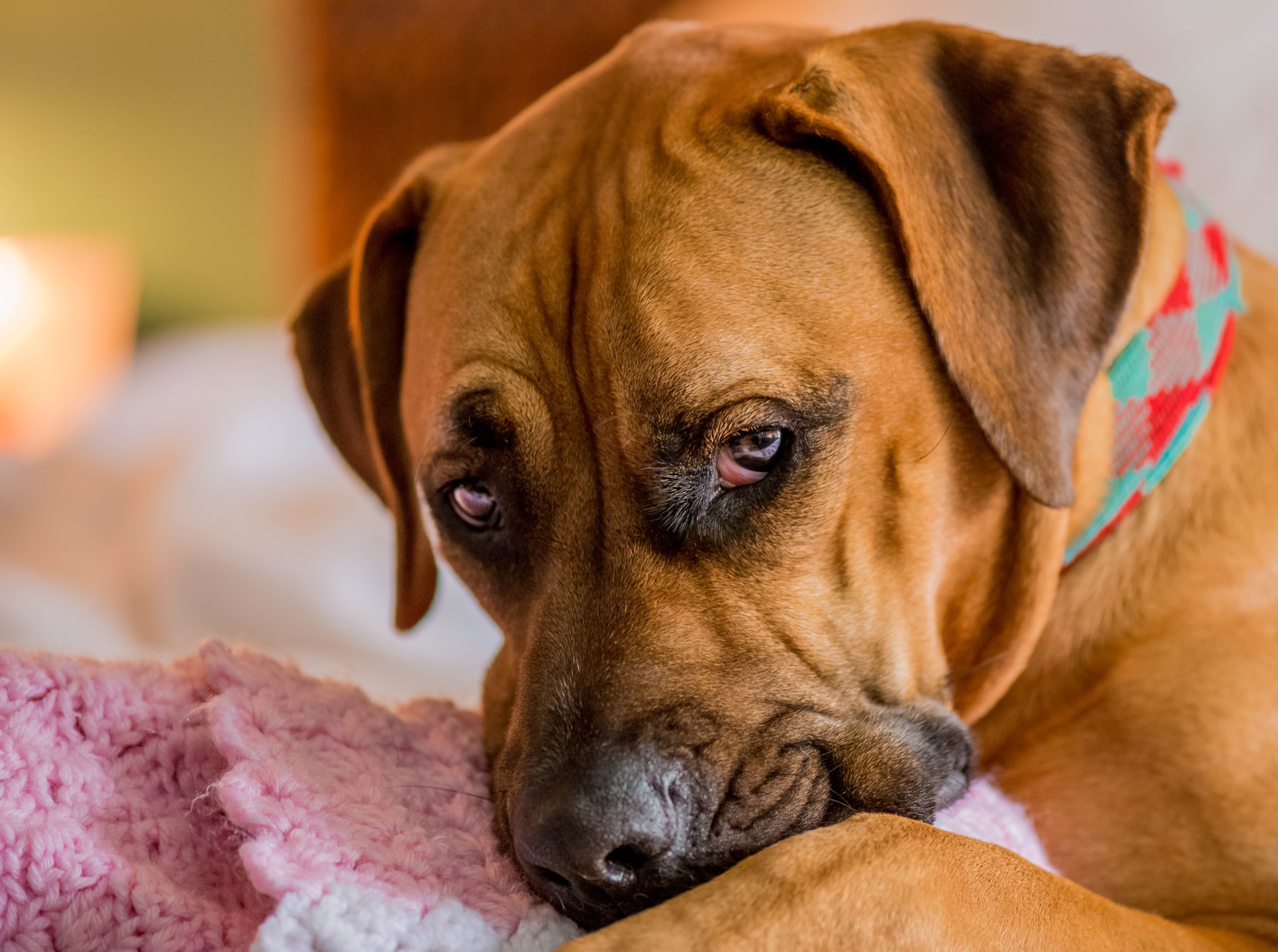 Top 14 simptoma stresa kod pasa