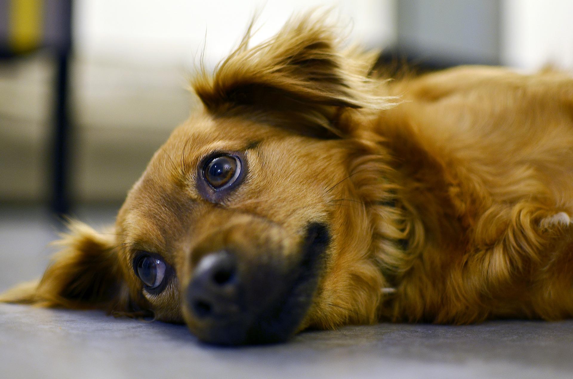 Vrste anksioznosti kod pasa