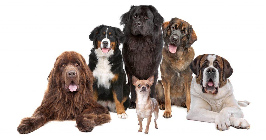 Popis svih rasa pasa na svijetu