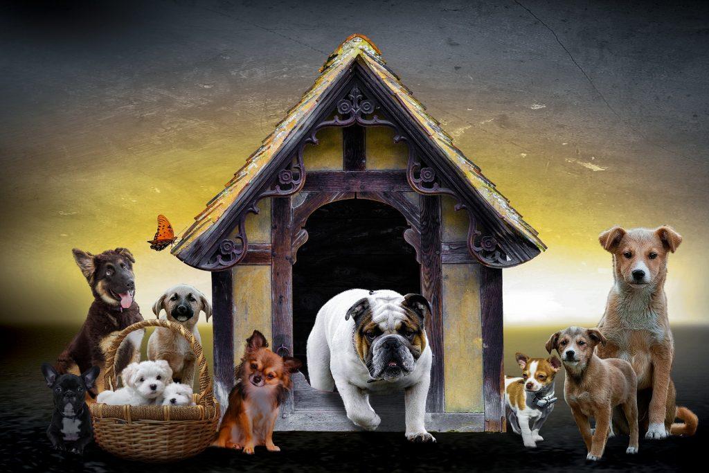 Sve vrste pasa