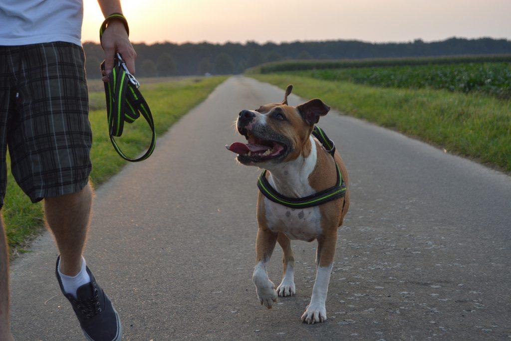 Kako naučiti psa naredbu dođi