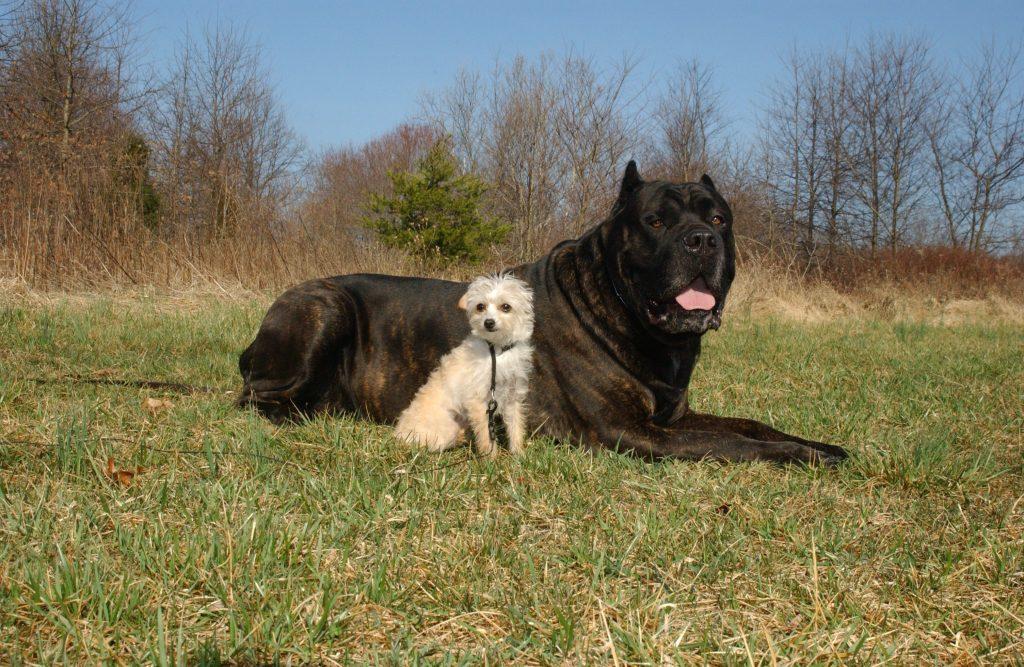 Psi čuvari