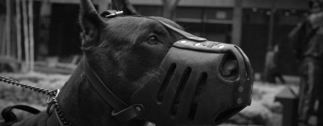 Top 10 najopasnijih pasmina pasa na svijetu