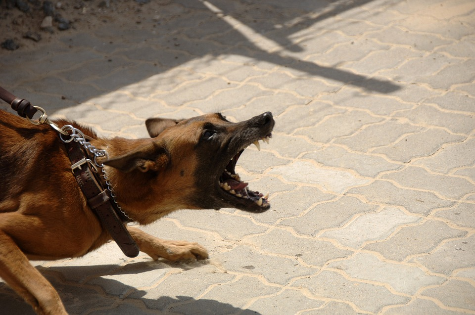 Top 10 najubojitijih pasmina pasa na svijetu