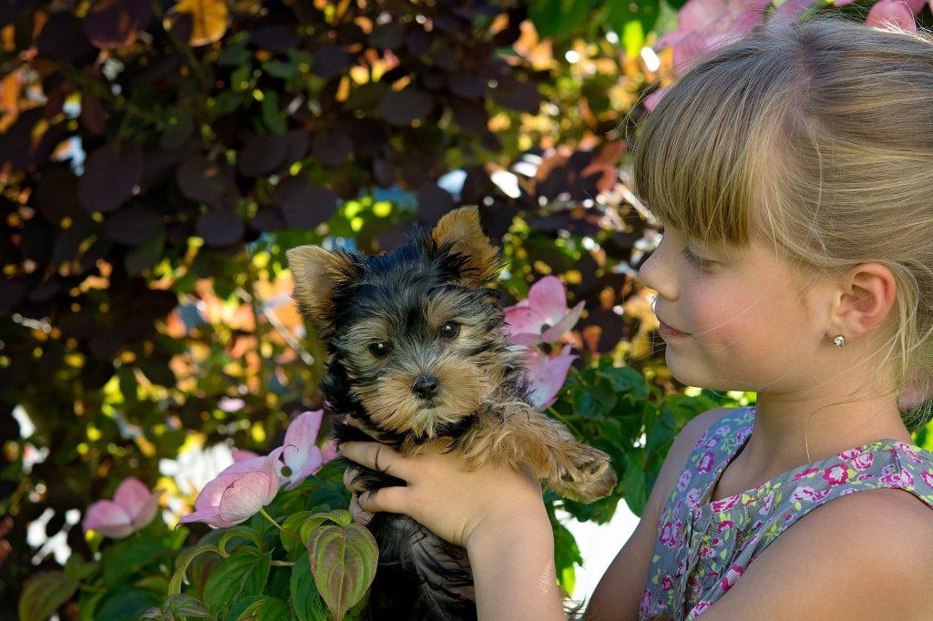 Top 100 ženskih imena za pse