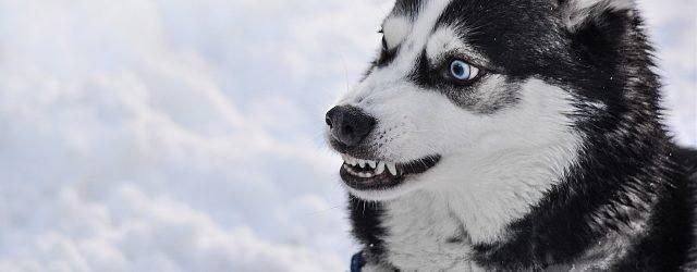 Što Psi Mrze