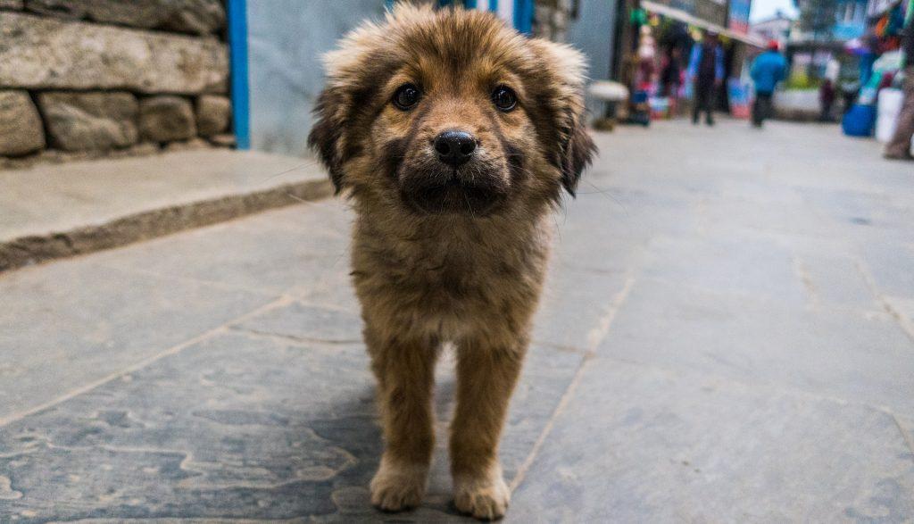 Nepoznata Osoba Prilazi Psu I Gleda ga U Oči
