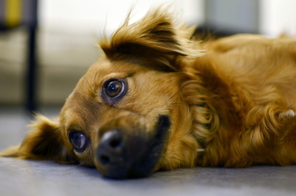 Top 10 Stvari Koje Ljudi Rade Psima, A Psi Ih Mrze