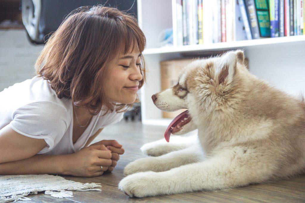 Top 10 najboljih prijateljskih pasmina pasa na svijetu