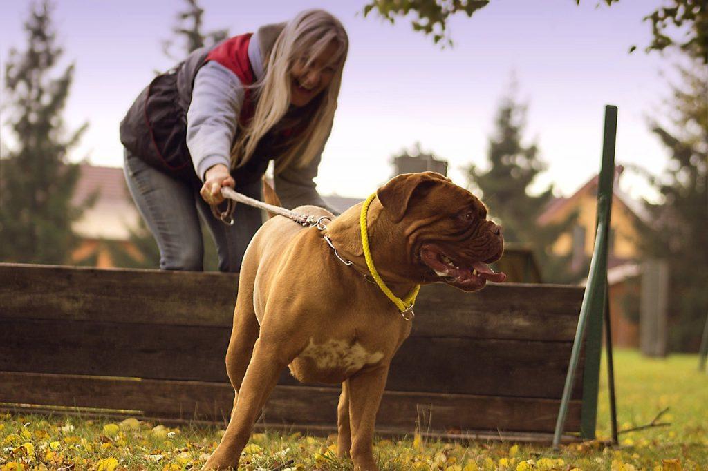 Što Je Štetno Za Psa