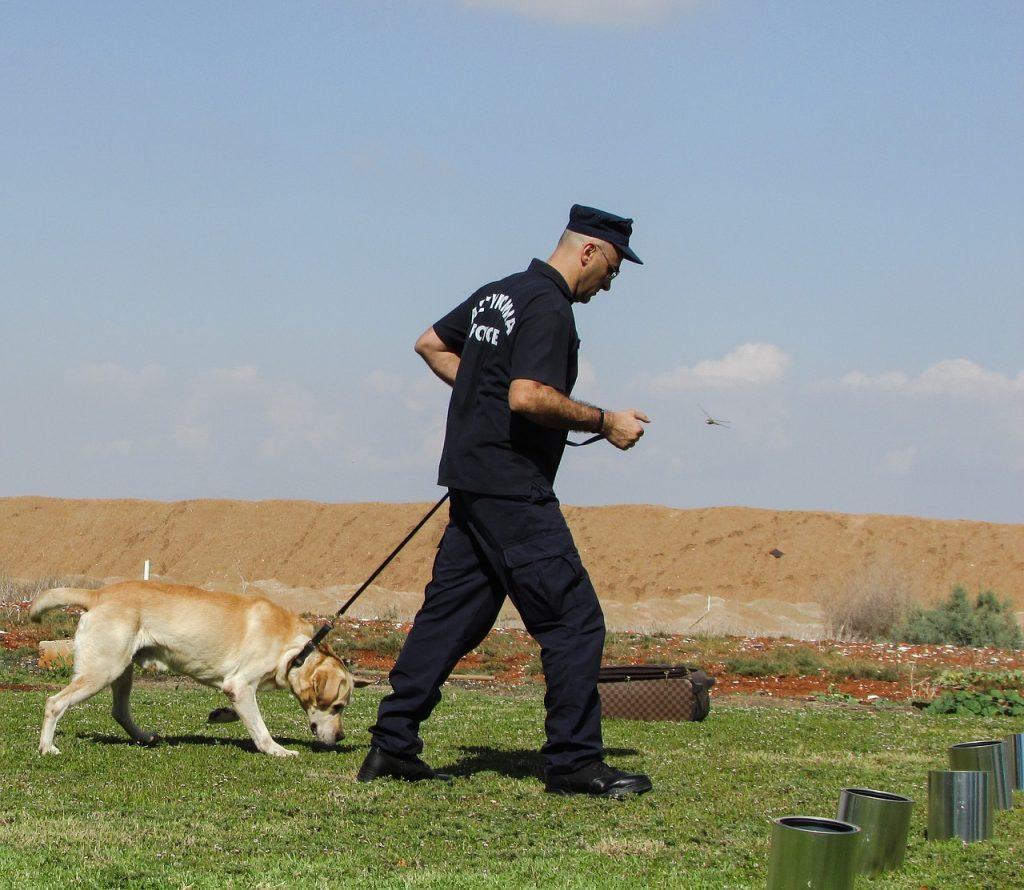 Labrador Retriver policijski psi