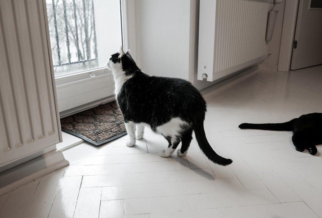 Svježa maca vids