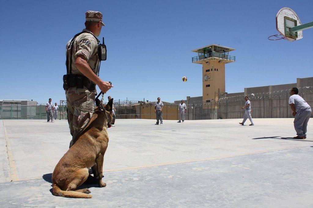 Najbolji K9 Policijski Psi