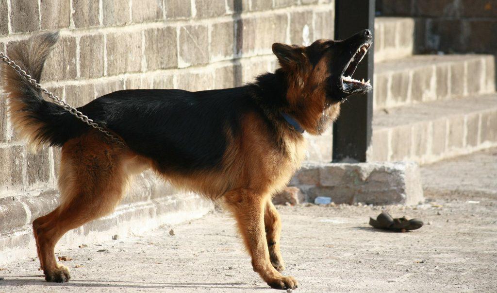 Najglasniji psi